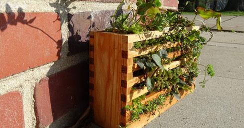 Als Geschenk war sogar eine kleine Mauer mit typischen Pflanzenarten gestaltet worden