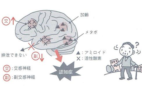 「自律神経失調症を知ろう」より