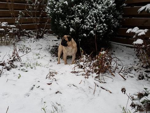 Baloe in de sneeuw