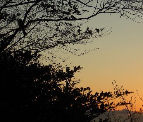 ずっと止まっています。まるで日の出を待っているかのようです。