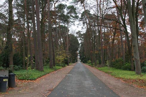 Hauptweg durch den Waldfriedhof