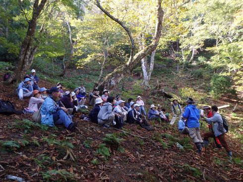 栃の木巨木林の中で栃の木と自然について考える