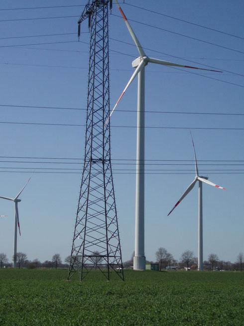 """Die Verdrahtung der Landschaft führt zu vielen Todesfällen bei den Weißstörchen und anderen Vogelarten. In den Windmühlen werden unsere Großvögel regelrecht """"geschreddert""""."""