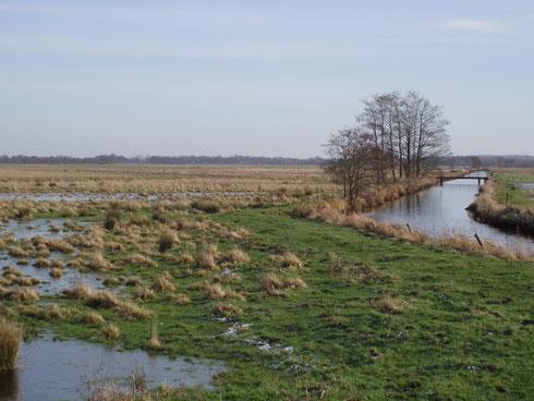 Hörnerauniederung - Ankauf von Feuchtwiesen für den Weißstorch