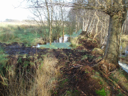 Anstau von Entwässerungsgräben - Nov.2013