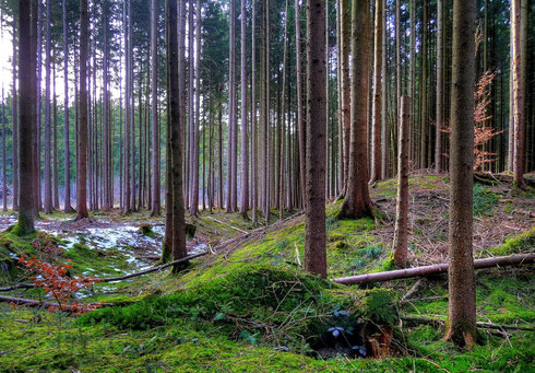 Deisenhofen West
