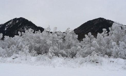 26.12.2007 (etwas südlich vom Sylvensteinsee)