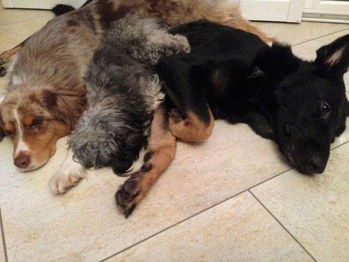 ... und sie haben sich alle Drei lieb :))