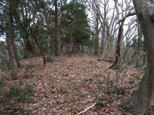 山頂です。何の変哲もないだら~っとした平地です。雑木がいっぱいで展望も効きません。