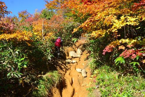 登り始めから登山道が雨にえぐれて大きな岩がごろごろ(雨の時は川になるのでしょう)。こんな登りづらい道を延々と。