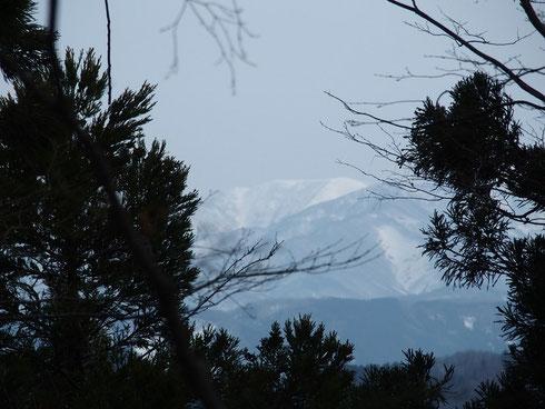 部子山の先に銀杏峰が望めた貴重なワンポイント。        近くの山では銀杏峰はまず見えません。