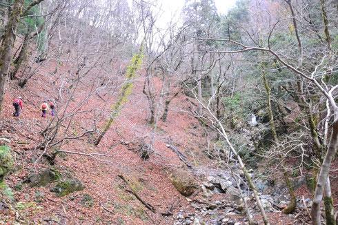 落ち葉した明るい林の中を透通るきれいな水の流れを脇に見つつ谷を詰めて行く。気持ちいいですね。                      やがて川は二股に分岐する地点でその右手の尾根に取りつく。
