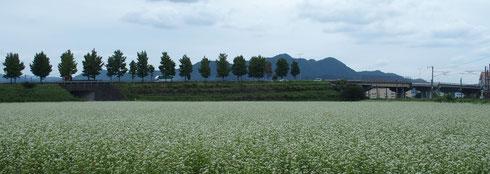 満開のソバ畑を前にした文殊山
