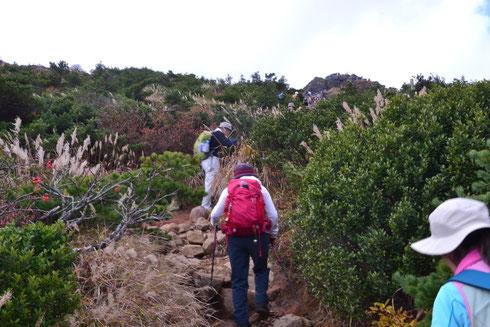 山頂までは1時間半弱の行程です。最初は低木樹林帯の木道を歩く。山頂が見えてくるとこんな調子です。
