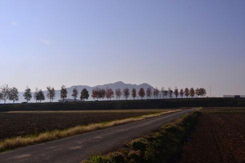 今朝の文殊山です。国道の街路樹はすっかり紅葉しています。            ヘッダー写真もこの風景に更新しておきました