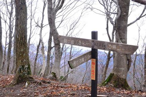 尾根はかなりの急登だったが、ゆっくりのマイペースでジグザグの踏み跡を辿って行ったのでまずまずの調子でした。             登り切ると中央分水嶺・・・これぞ高島トレイルです。                   左手の駒ヶ岳まではブナ林の緩やかな登りです。落葉を踏みしめる感触が気持ちいいし、見通しも抜群で景色も楽しめた。