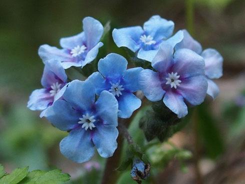 尾根に出るまでこの花が多い。いつも楽しみにしている。