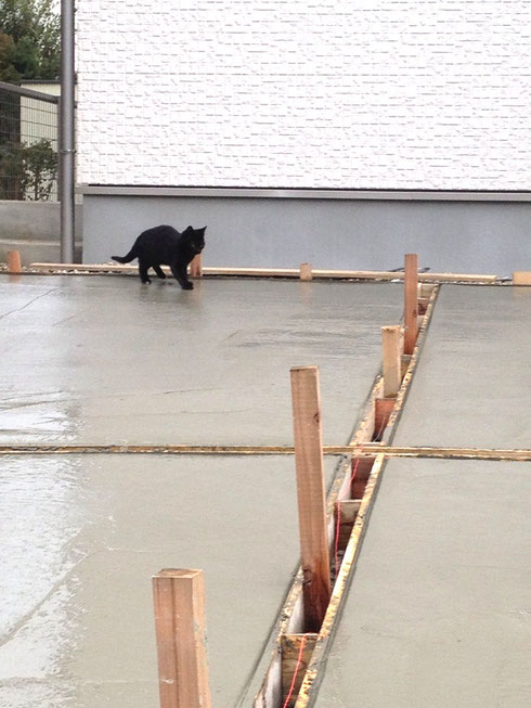 打ちたてのコンクリートの上を歩く猫。足跡がついちゃうよ!!