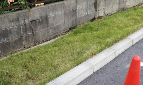 芝刈り前 特に縁石との際が伸びています