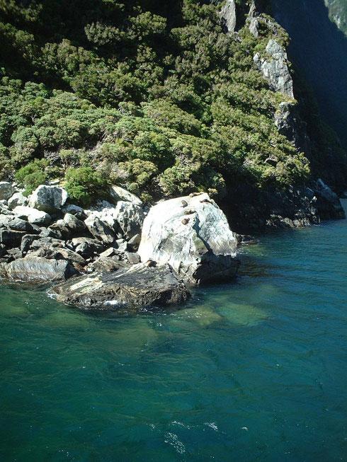 岩の上には沢山の海獣がひなたぼっこしている