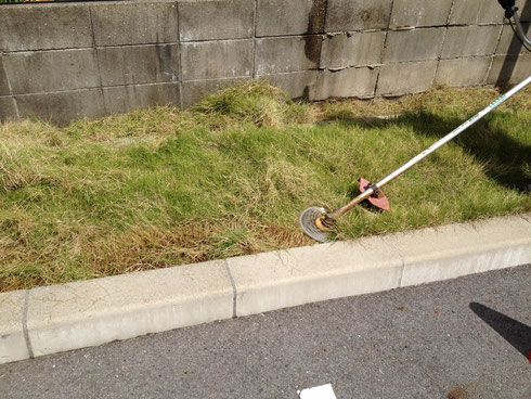 刈払機で芝生の際を刈って行きます