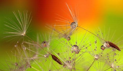 A beleza também está nas pequenas coisas...