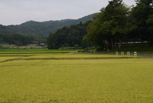 吹雪谷と庵田米の生産地(右奥の白壁は当山境内)。