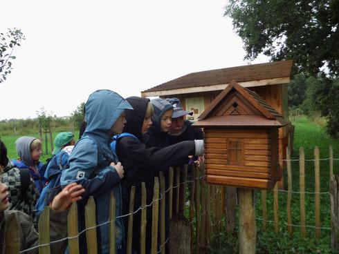 Im Inneren der Honigbienen-Schaubeute gibt es Spannendes zu sehen