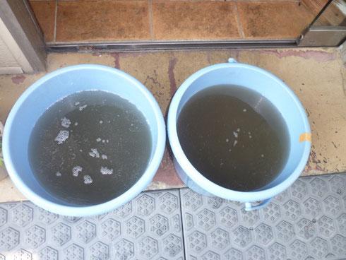 汚水は真っ黒ですね。