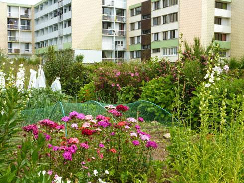 Jardins partagés au HLM à Guingamp