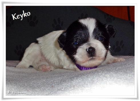 Keyko mit 15 Tagen, sie hat einen wunderschönen runden Kopf, sie ist VERMITTELT