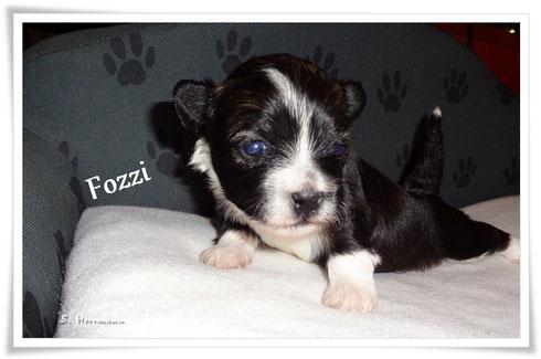 Fozzi, ist ein fiffiger Bursche der auch schon weiss das Schmusen sehr schön ist, er sucht auch noch ein liebes zu Hause