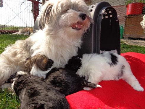 Mama Pebbles mit ihren Kleinen beim ersten Freigang