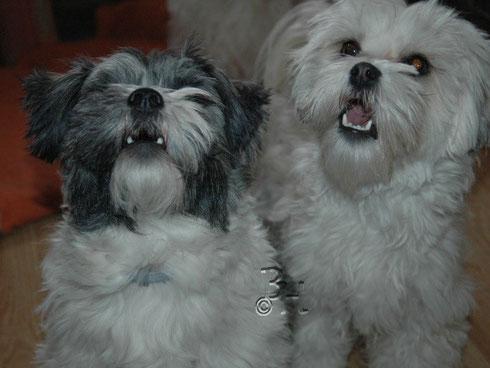 Crisu und Happy