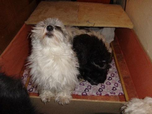 Kontrollabnahme durch die Hunde der Wurfkiste :-)