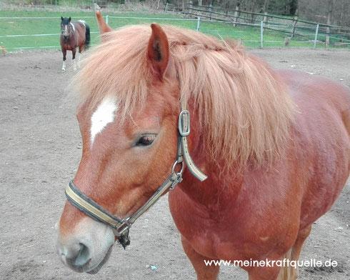 Reiterferien für Kinder, Reiterhof im Sommer, Kinder und Pferde, Kraftquelle