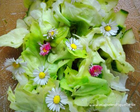 Wildkräutersalat, Salat mit Gänseblümchen, Kraftquelle