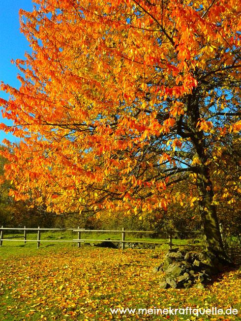 Herbst genießen, Herbstzauber, Kraftquelle