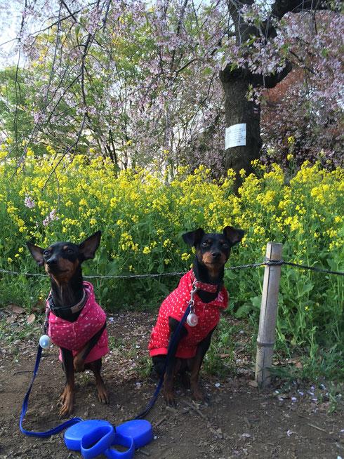 2014.4.14 小金井公園