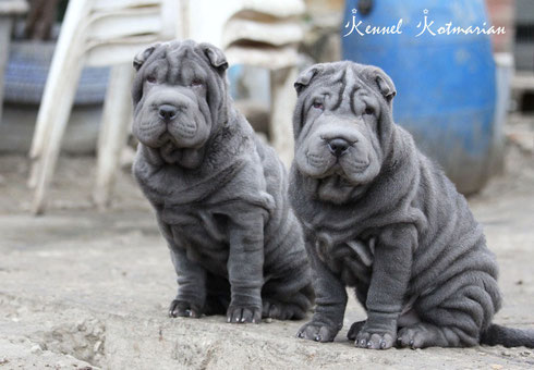 Sale blue male & female!!!