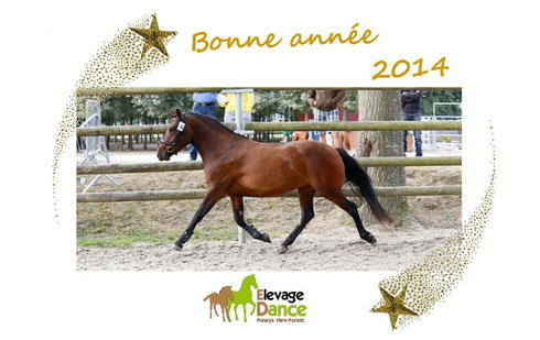 Bonne année 2014, Elevage Dance Poneys New-Forest