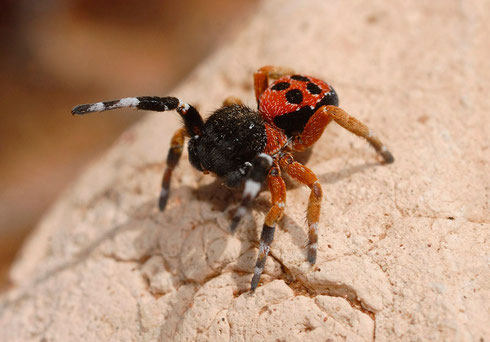 Anansi, la mère araignée
