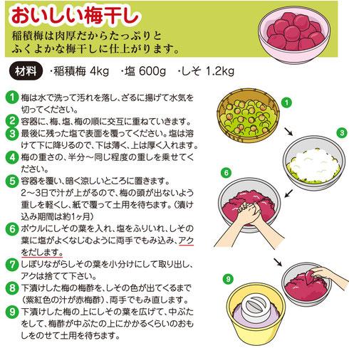 美味しい梅干しの作り方