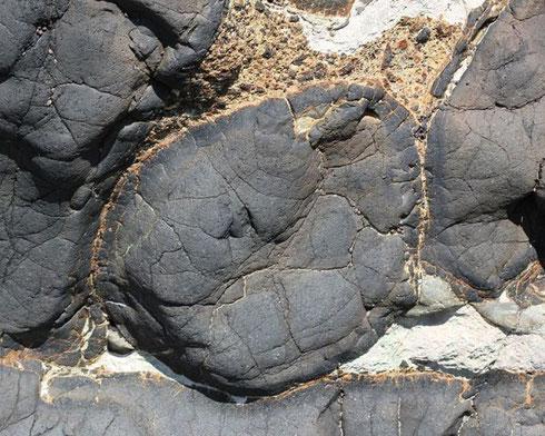 Coupe transversale dans un basalte en coussin présent e nmontagne. Il est identique à ceux présents au fond de la mer près des dorsales.