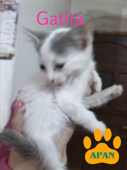 hermosa gatita en adopcion