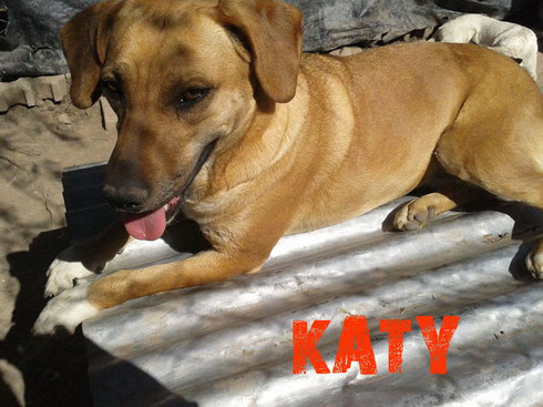 katy en adopcion