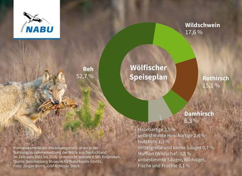 Nahrungszusammensetzung des Wolfes anhand von Losungsuntersuchungen