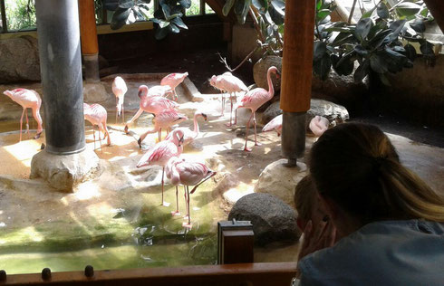 ... und noch einmal eine kleine Impression aus dem Flamingo-Haus