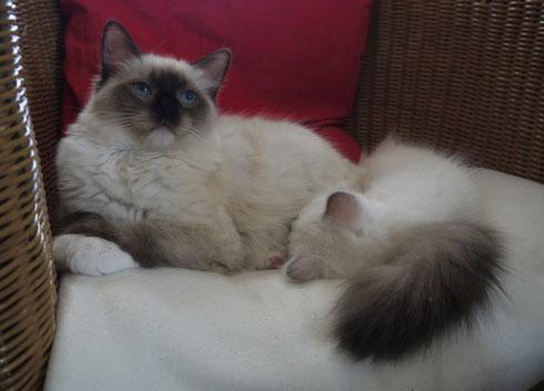 Alfie mit Qyshawn, 6 Monate alt