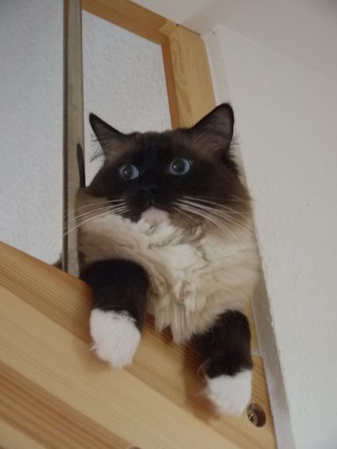 Im Gefängnis?? Nein... Alfie gehört zur Familie der Treppenhänger :)